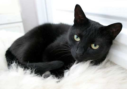 black cat on white rug
