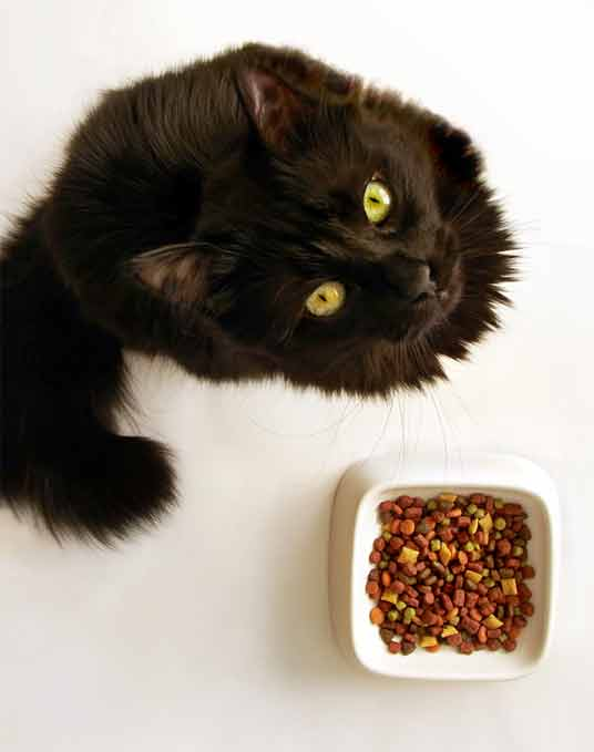 cat and food