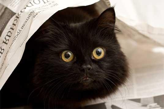 peeping black cat