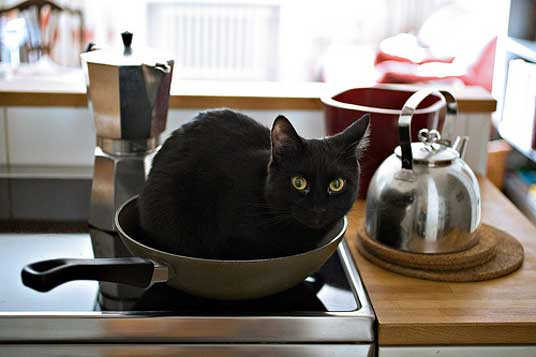 frying pan cat