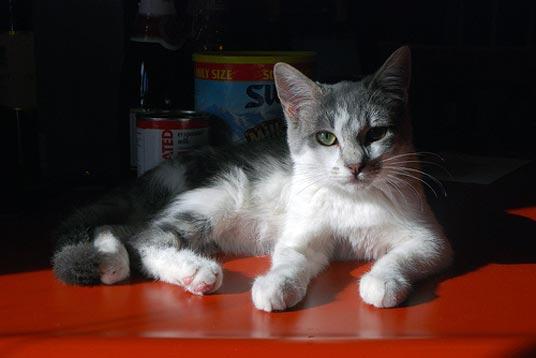 counter cat
