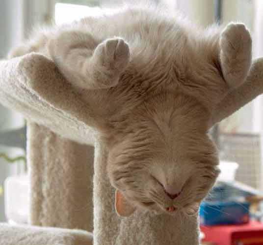 cat sleeping upside down