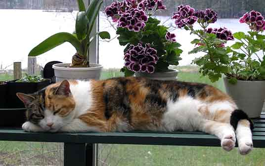 cat on bench