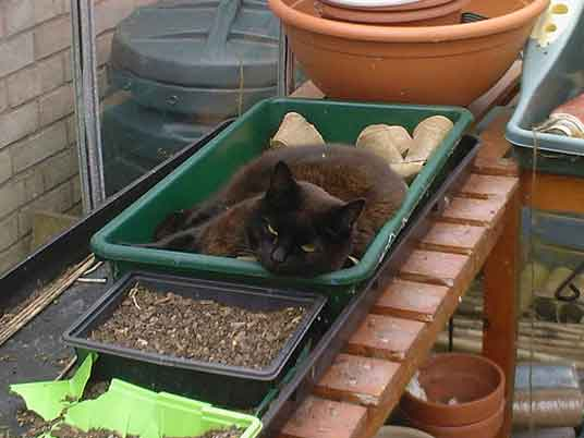 cat in seedling tray