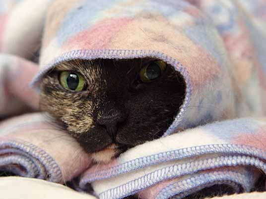 blanket peeking cat