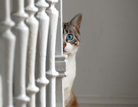 bannister cat