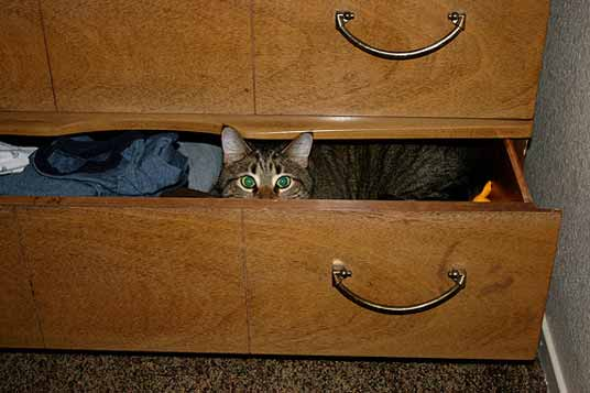 drawer cat