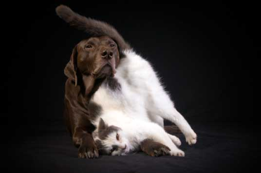 brown dog with cat