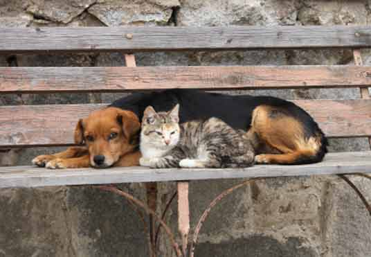 cat with dog on bench