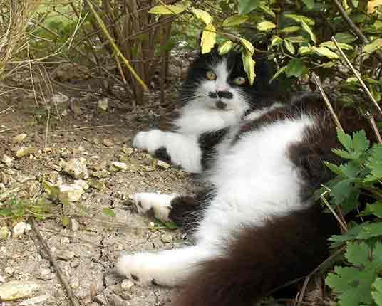 tux cat