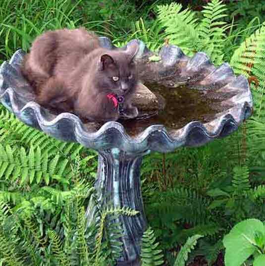 birdbath cat