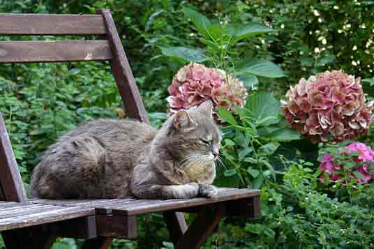 Cute Cat Pictures in Gardens