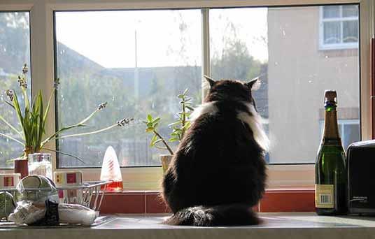 peering cat