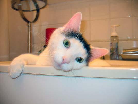 basin cat