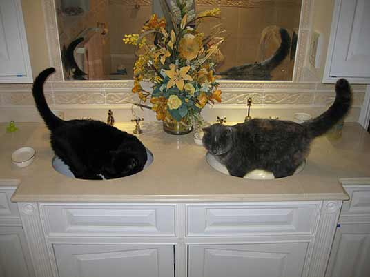 two basin cats