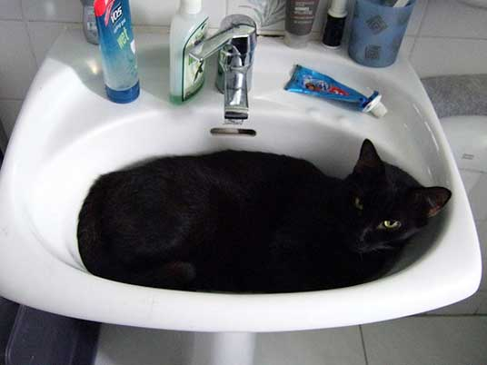 black basin cat