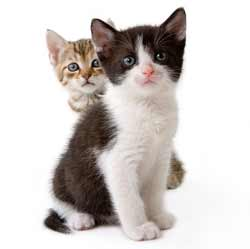 two kittens10