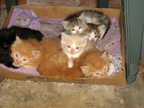 litter kittens