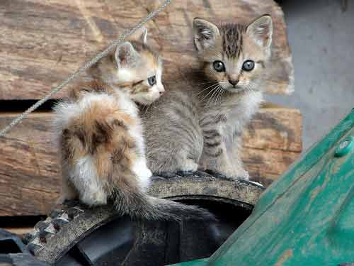 new kittens
