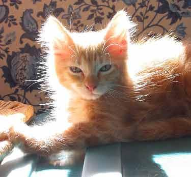 kitten in sun