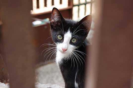 cat spot litter review