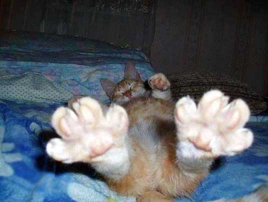 outstretched paws