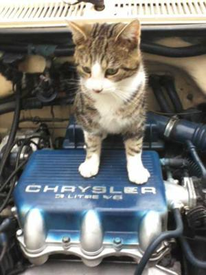 MY MASTER MECHANIC