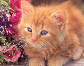 Beautiful orange kitten