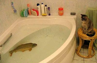Cat fishing in the bath tub