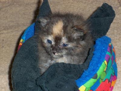 Milo as a kitten sitting in her little bed.