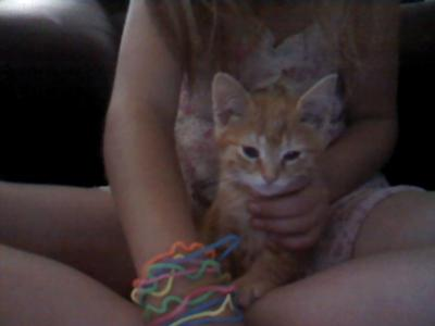 My kitten tiger