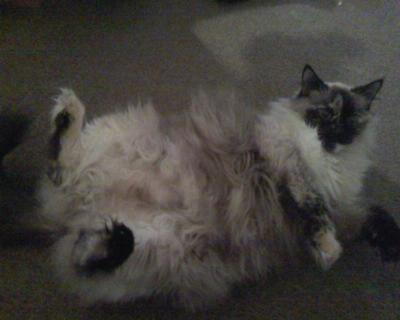 Ready to get her belly rubbed