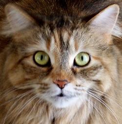 Maggie, looking curious, as always!