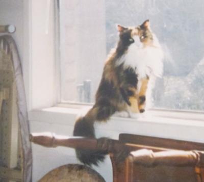 Tabitha on the window sill taken around April 1996.